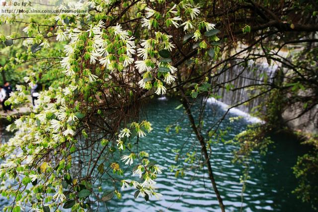 【千岛湖】天池岛 烟雨朦胧关不住春色满园