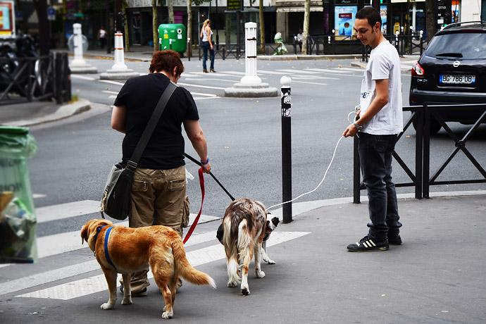 街头遛狗是一种时尚