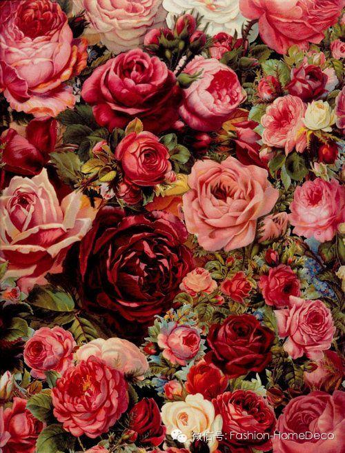 微信头像 花朵 风景 玫瑰花