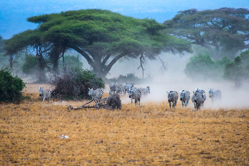 肯尼亚安波塞利 非洲大象的故乡{四} - 国防绿 - ★☆★国防绿JL★☆★