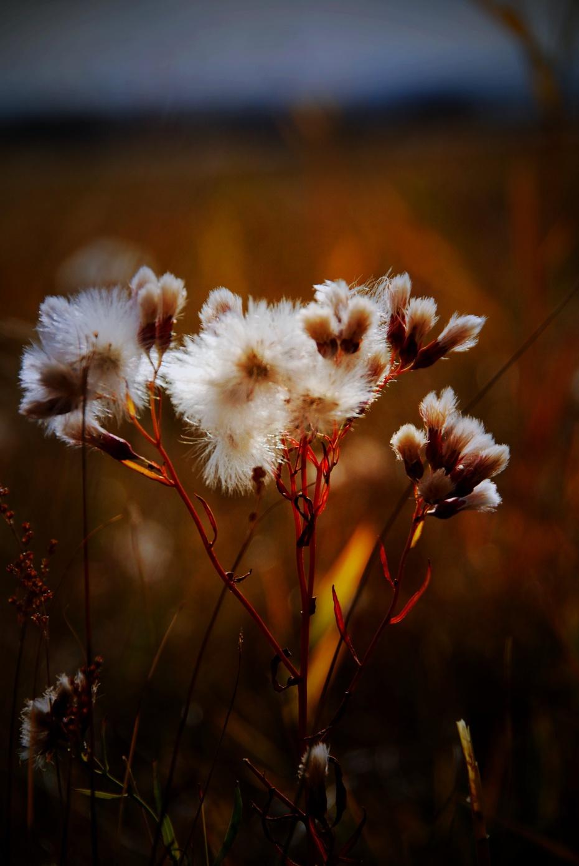 黑与白的世界里 叫醒桂花树下的残枝败叶 一起痛饮缺了又圆的月亮