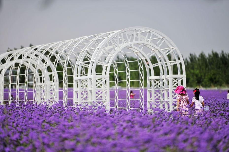 紫色梦幻中卫金沙岛