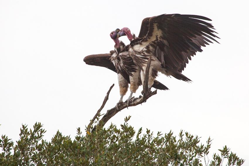 走进肯尼亚 面对面观赏动物大迁徙震撼场景 - H哥 - H哥的博客