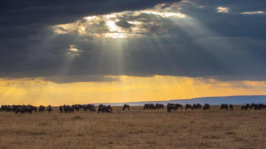 走进肯尼亚 面对面观赏动物大迁徙震撼场景{三} - 国防绿 - ★☆★国防绿JL★☆★