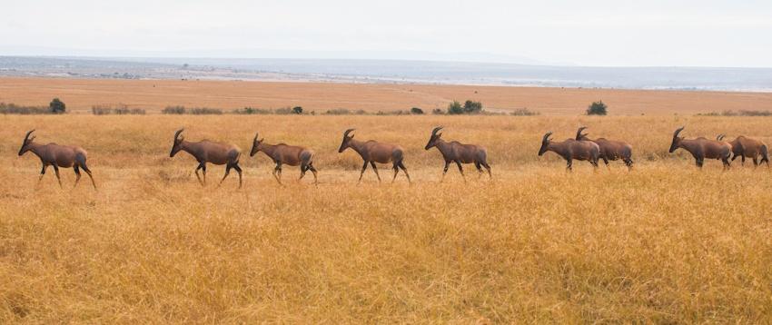 面对面观赏动物大迁徙震撼场景