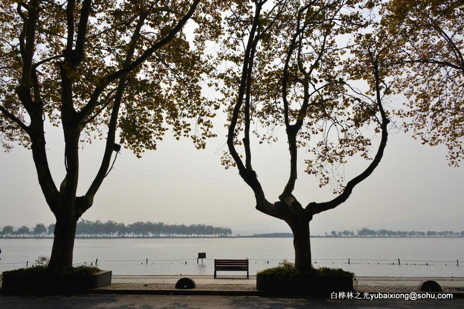 雾气中的深秋西湖断桥   郁百雄 - zq8523 - 852农场3分场(20团3营)知青网