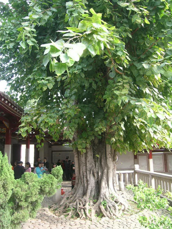 椰子树; ——六花:荷花,文殊兰花,鸡蛋花,黄姜花,黄缅桂,地