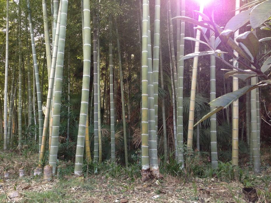 回家过年感受山乡年味 - 余昌国 - 我的博客