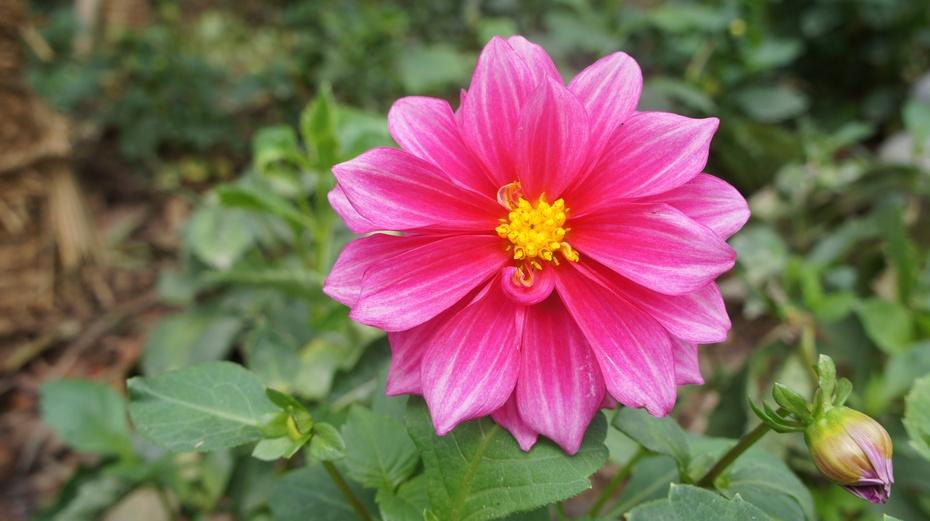 广西南宁:青秀山上那些花 - 余昌国 - 我的博客