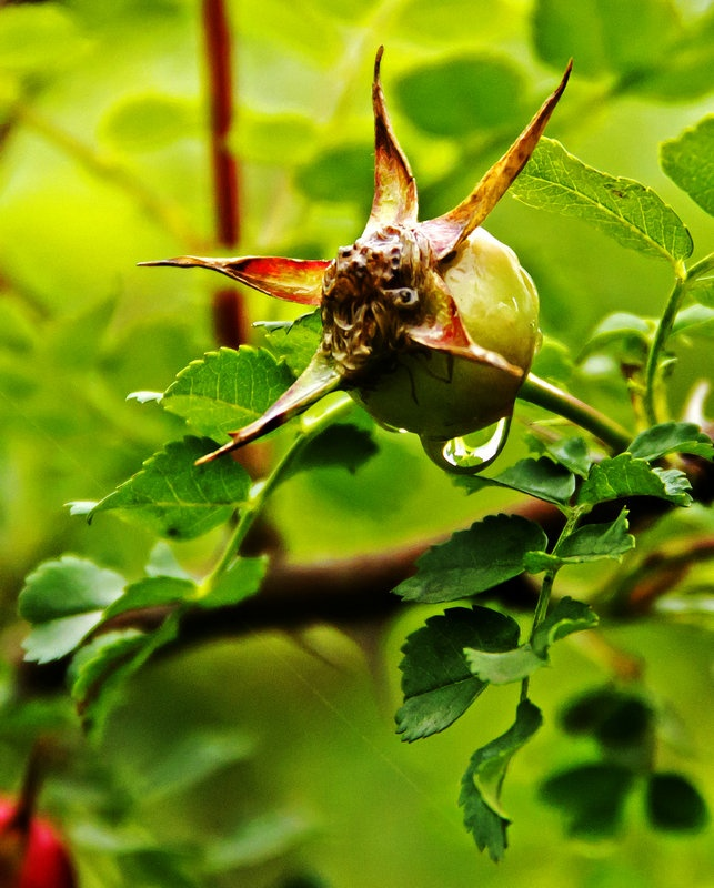 雨后轻飞燕,水润花更娇 - 侠义客 - 伊大成 的博客