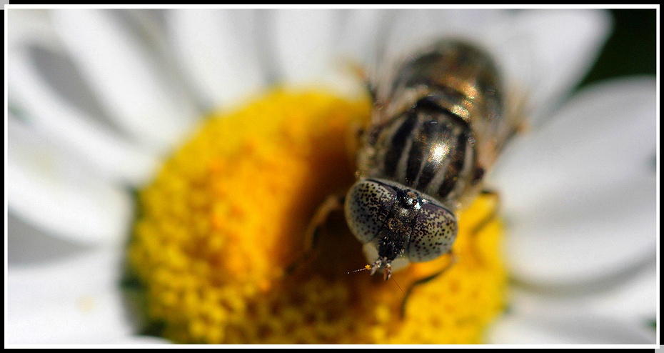 昆虫被列入节肢动物门
