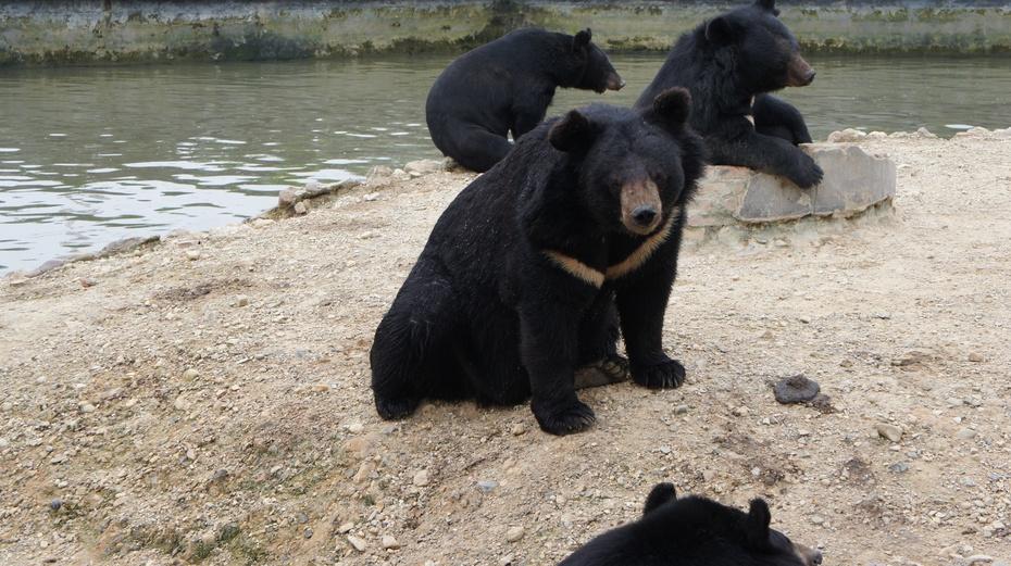 世界最大的老虎与黑雄基地:桂林雄森熊虎山庄