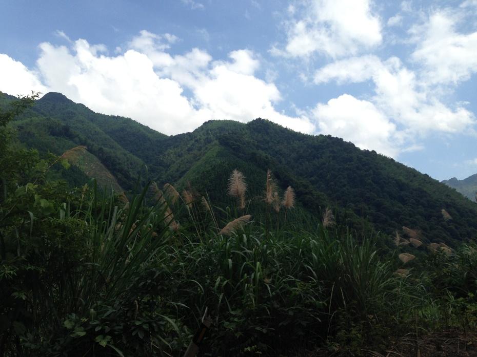 桂林灌阳:蓝天白云芦花飘 - 余昌国 - 我的博客