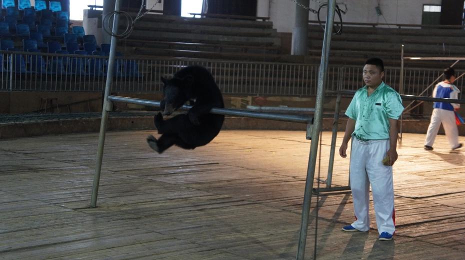 世界最大的老虎与黑雄基地:桂林熊森熊虎山庄 - 余昌国 - 我的博客
