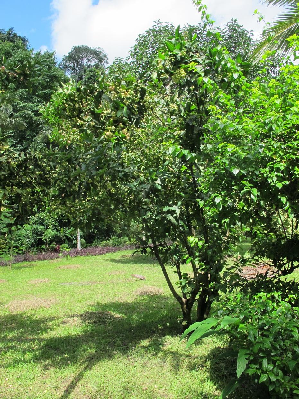 莫里热带雨林国家森林公园