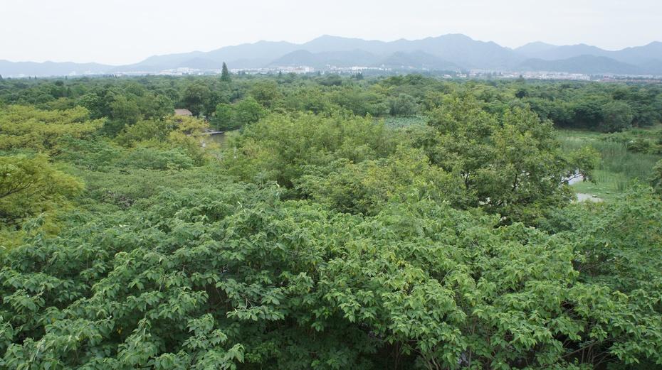 西溪·洪园:生态与人文相融的湿地 - 余昌国 - 我的博客