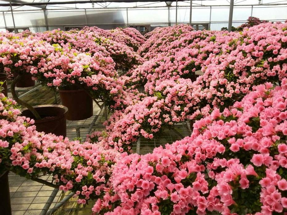 老乡的花花世界 - 余昌国 - 我的博客