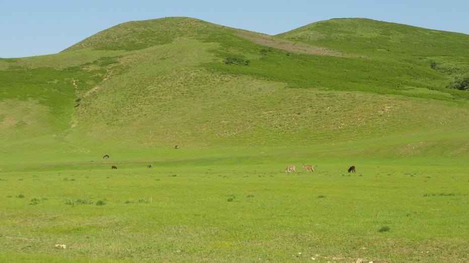 二十二,《边疆行》从五岔沟镇出发,经乌兰毛都,树木沟