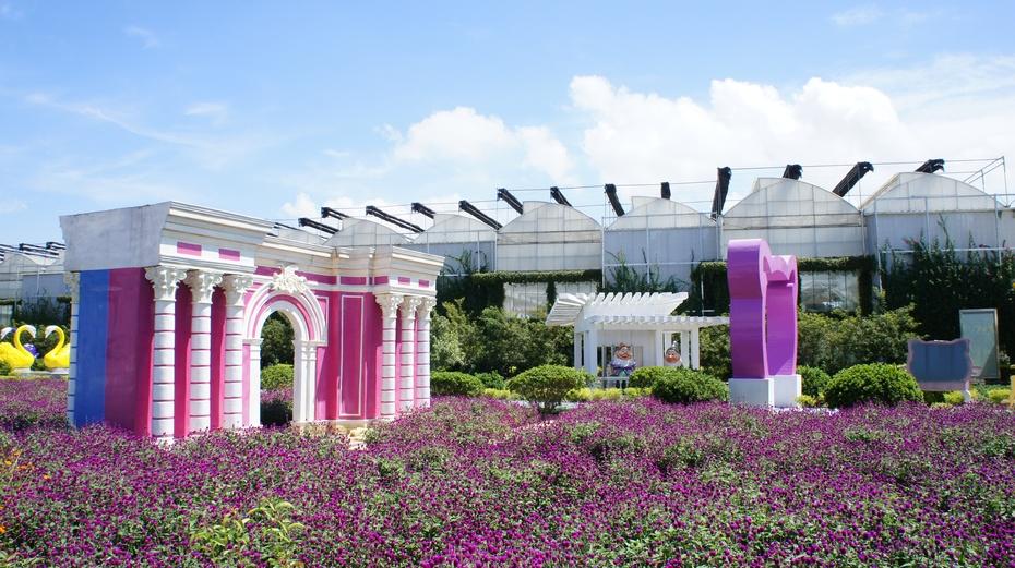 走进广州南沙百万葵园 - 余昌国 - 我的博客