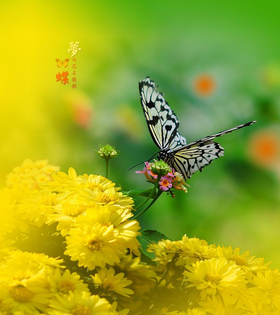 梁祝图片木雕蝴蝶