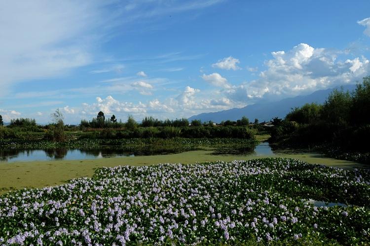 云南大理洱海海西的纯粹原生态美景 - 余昌国 - 我的博客