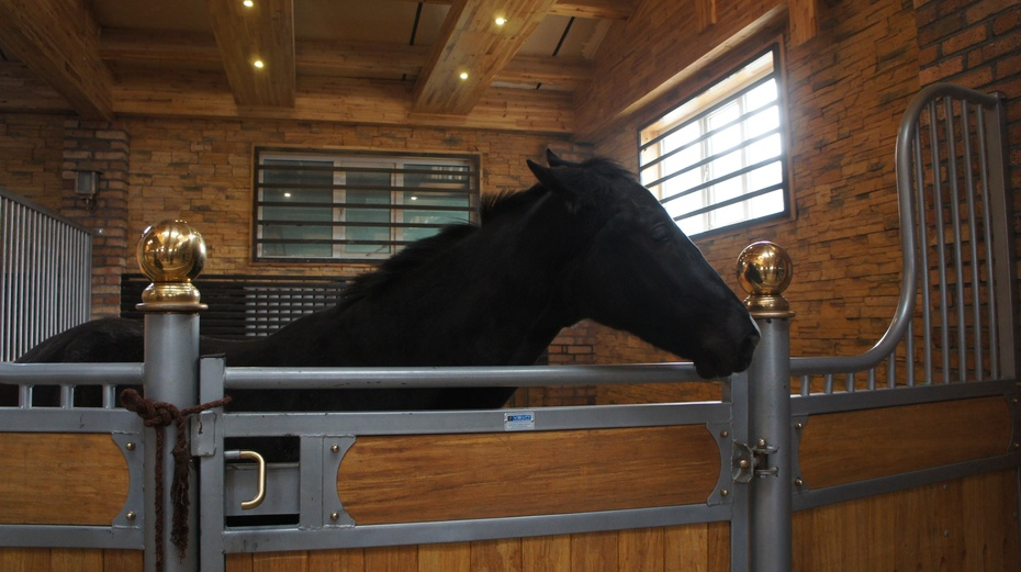 实拍世界上最贵的马:汗血马 - 余昌国 - 我的博客