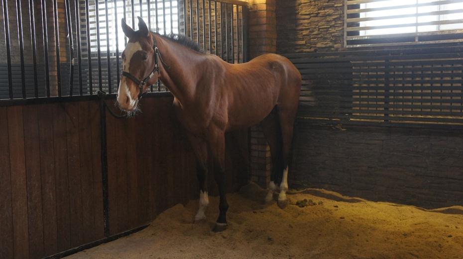 实拍世界上最贵的马:汗血马