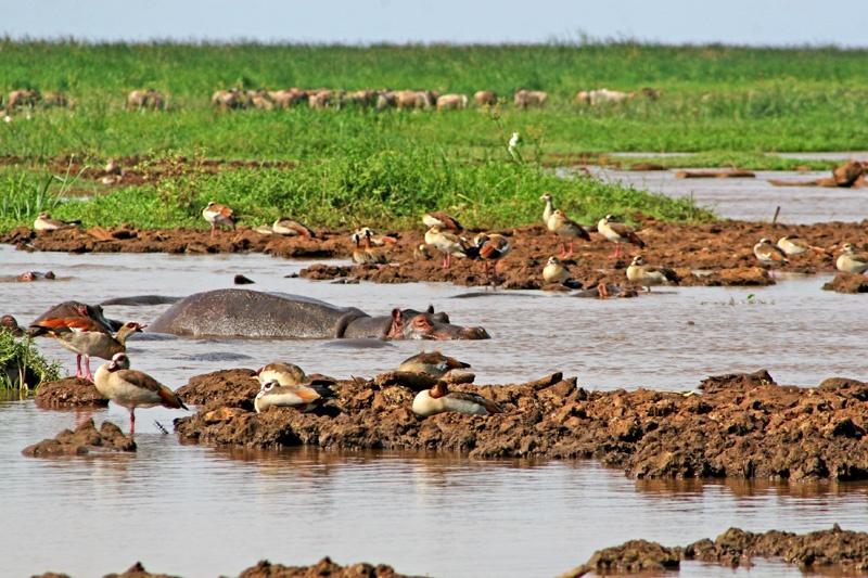 世界上唯一的,位于国家首都内罗毕野生动物园游记 - sihaiyunyou - sihaiyunyou的博客