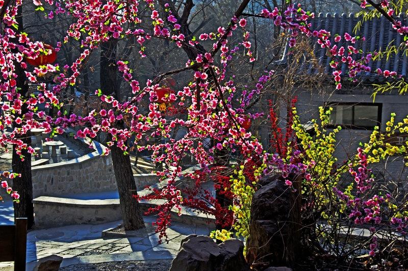 迎新春,红灯高挂中国梦 八大处,五彩缤纷春满园 - 侠义客 - 伊大成 的博客
