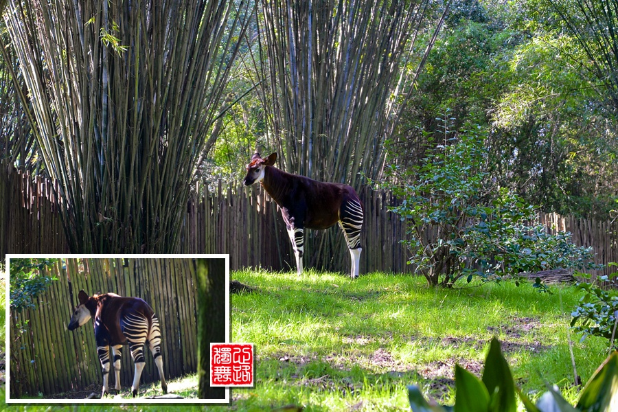 实拍:斑驴,你见过这稀有的动物吗? - 心路独舞 - 心路独舞