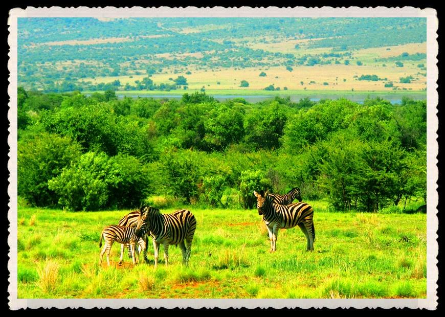 南非动物世界