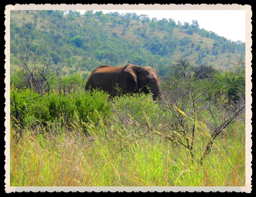 南非真是野生动物的乐园