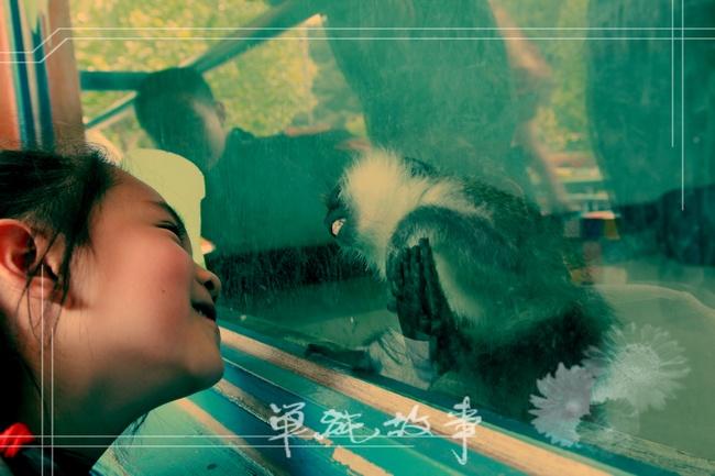 大连亲子游——森林动物园
