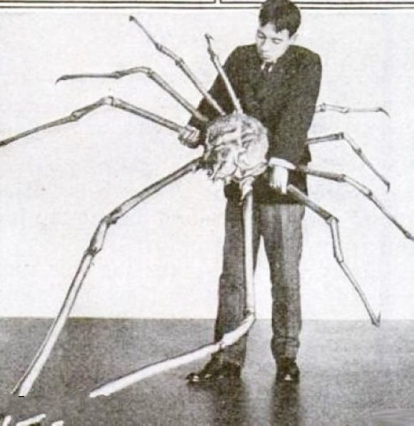 是世界上最大的节肢动物