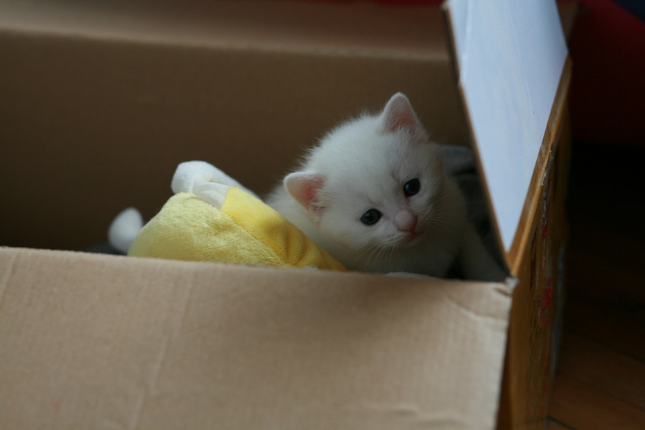小猫的奶粉和好便便,试验中