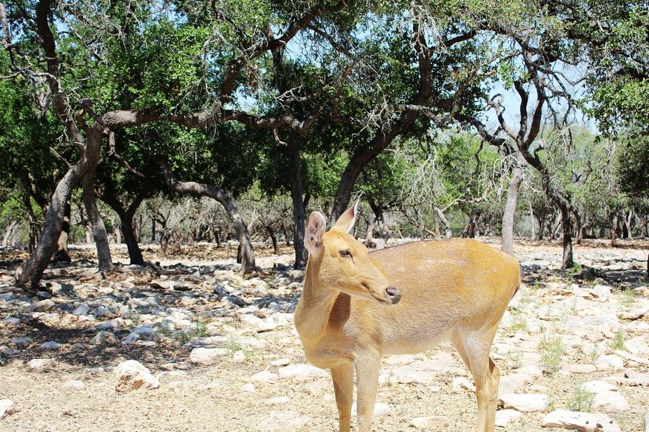 可爱的小颈鹿动物简笔画大全