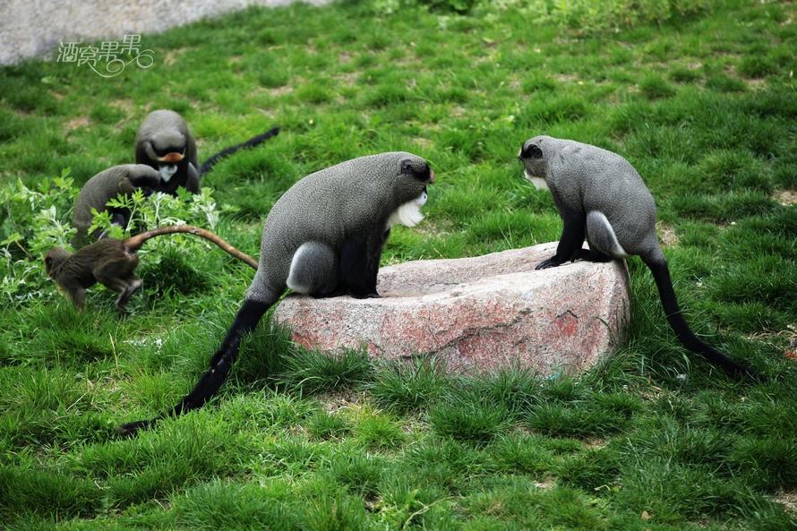 去森林动物园看看吧