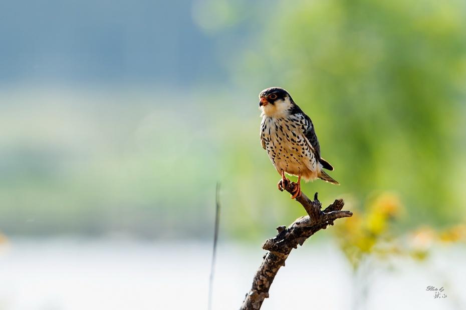 壁纸 动物 鸟 鸟类 雀 930_620