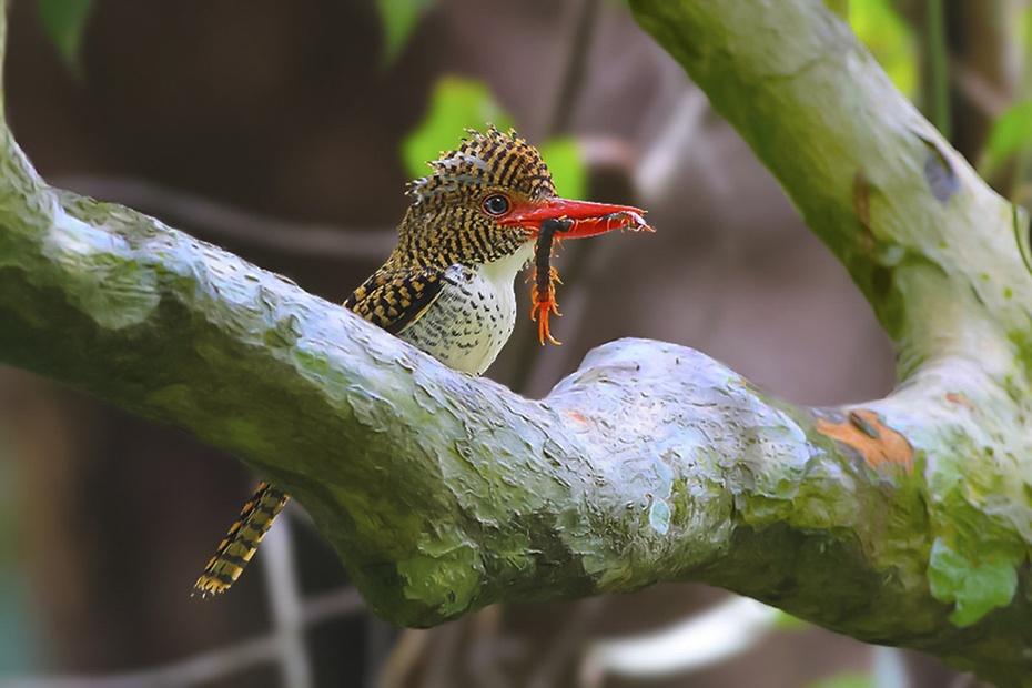 洲的热带雨林中