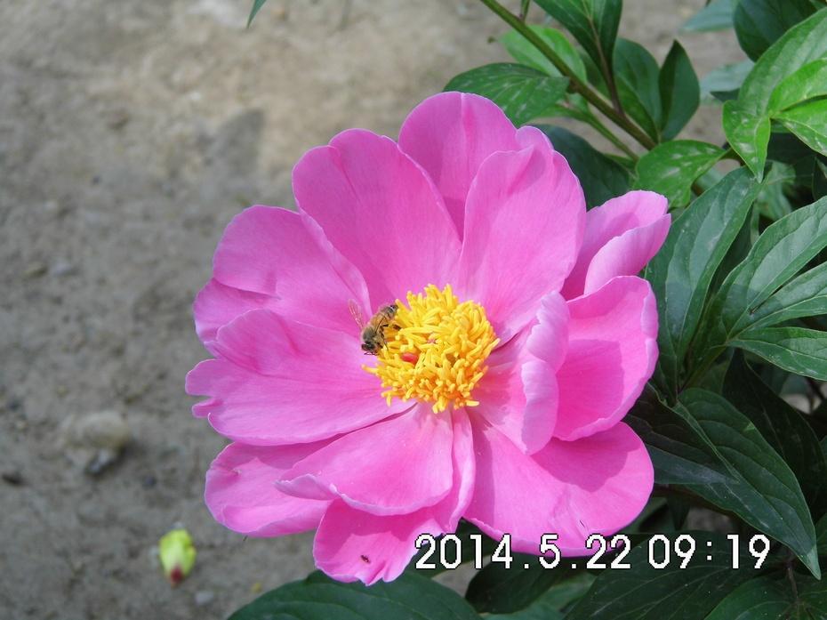 【摄影园地】四战友五月赏花拍花 - 九成 - 九成的博客