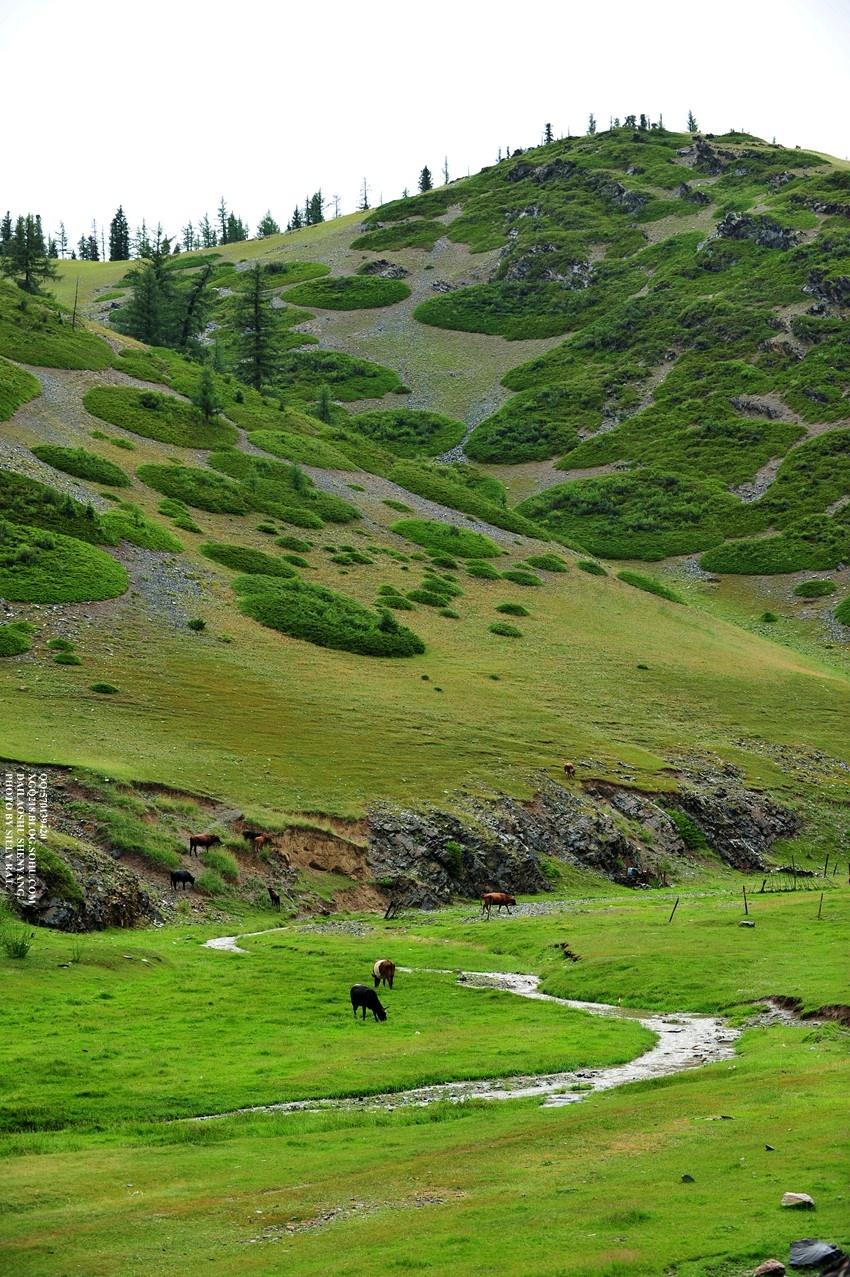 【图3:由新疆哈密去往巴里坤省道s203上,沿途秀美的风光!换个角度】
