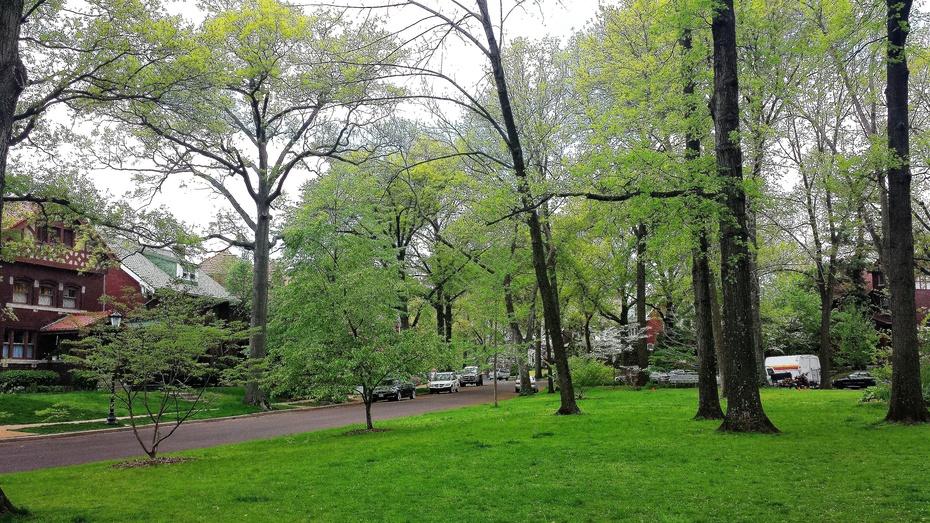 森林和鲜花丛中的美国民居 - H哥 - H哥的博客