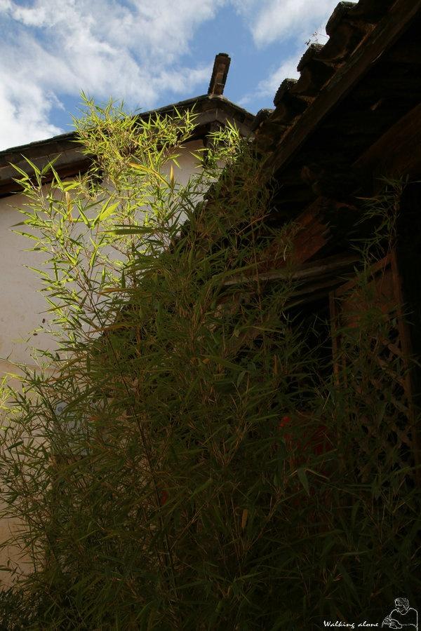 (转)沙溪,茶马古道上的集市 - 参天之傅 - 参天之傅