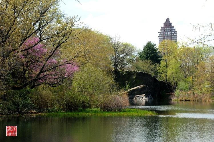纽约中央公园春色 - 国防绿 - ★☆★国防绿JL★☆★