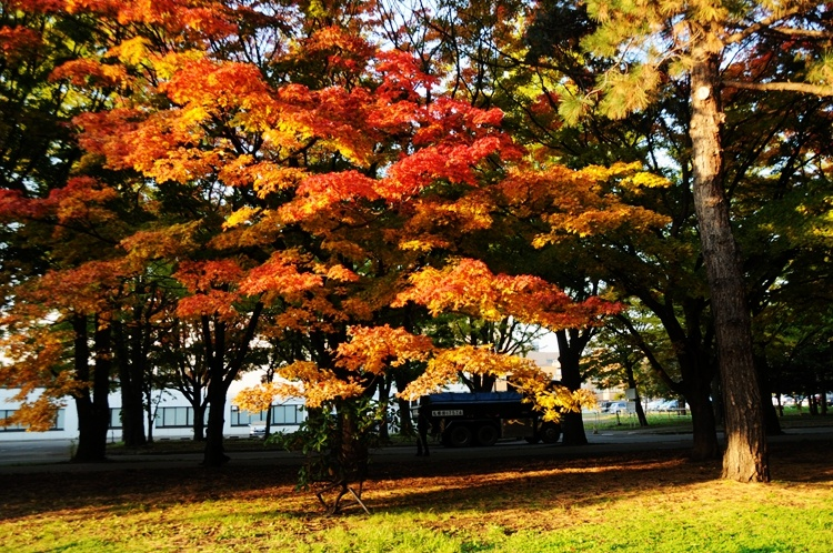 北海道:日本最美大学秋日风采 - 海军航空兵 - 海军航空兵