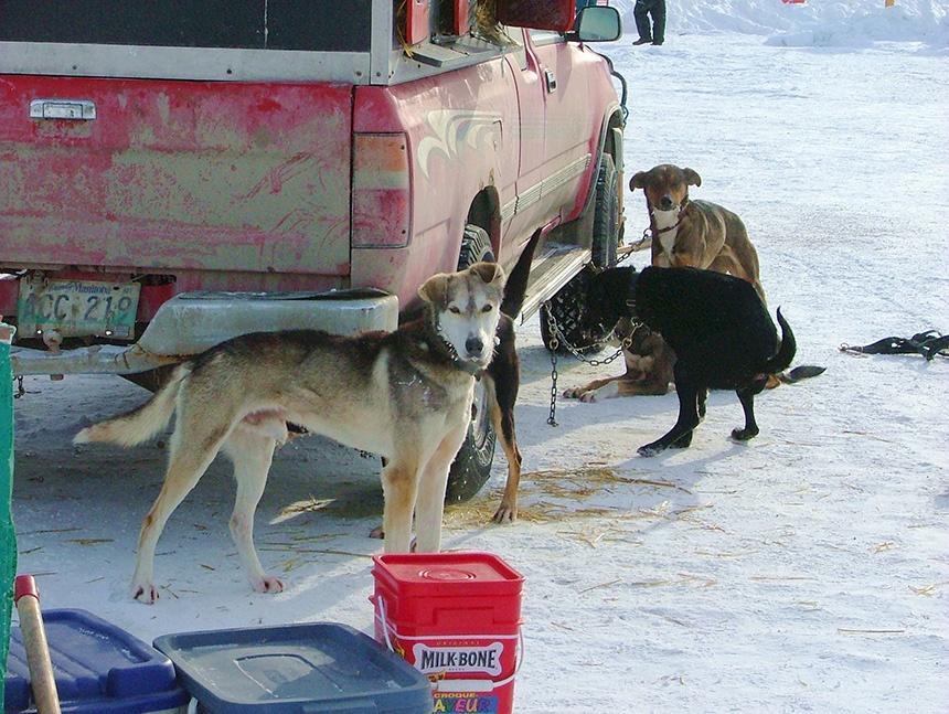 北美北极犬拉雪橇比赛 - sihaiyunyou - sihaiyunyou的博客