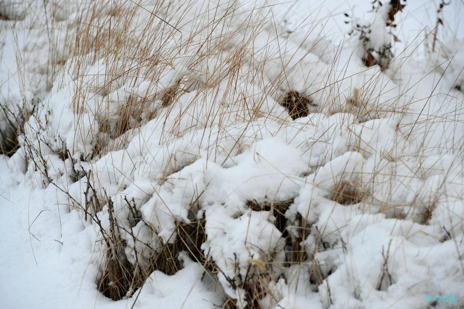 原标题:怀念黄土高坡的冬雪与深秋 匆匆的时光步伐,让人已到腊月28日了,蓝天下的黄土高坡,不见瑞雪的身影,不由回味起元月末的那场雪花飞舞的浪漫和深秋里高原秋色。 整个冬日,干燥的气候,让人期望着一场鹅毛大雪,以湿润北国的空气,也给高原一个久违的冬日雪景。腊月里,2015年的第一场雪降临大地,连续3天的雪天,给大地盖上了10厘米厚的白色冬被,看着窗外飞舞的雪花,心中不由感味儿时关中冬日玩雪的浪漫。走进雪地,厚厚的雪儿,让大地多了柔柔的踏感,看着树枝上垒叠雪,想象着树儿被雪滋润的安逸,而一堆堆昨天扫起的雪堆,