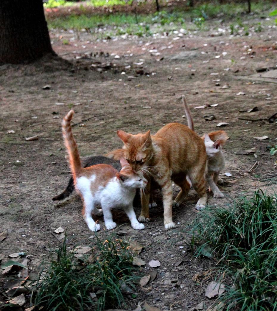 一家两口动物的图片