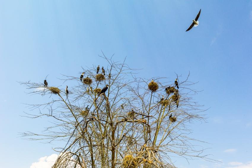 肯尼亚最美淡水湖---纳瓦沙观鸟看河马 - 国防绿 - ★☆★国防绿JL★☆★