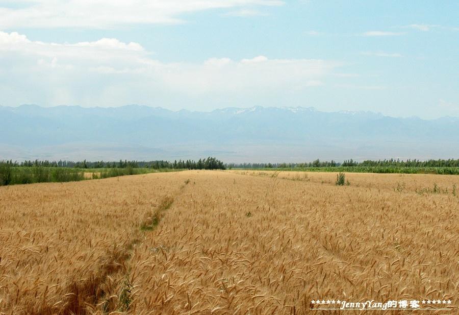 新疆天山野生动物园黒虎镇